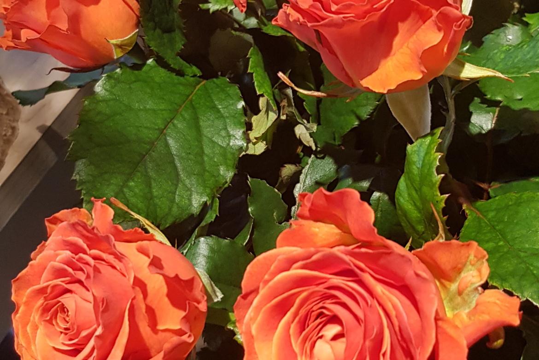 Rose orange Clarence